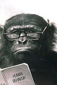 Chimp in pinstripes